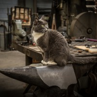 Of course, the shop cats know who the real shop bosses are.